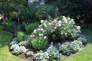 Plantings 12