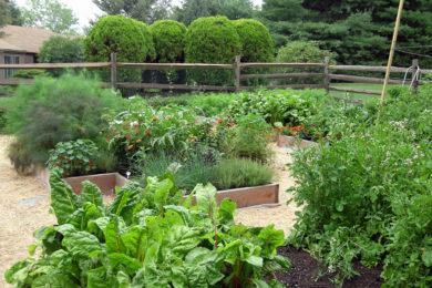 veggies-4