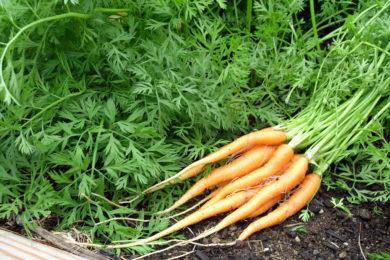 veggies-6