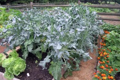 veggies-8